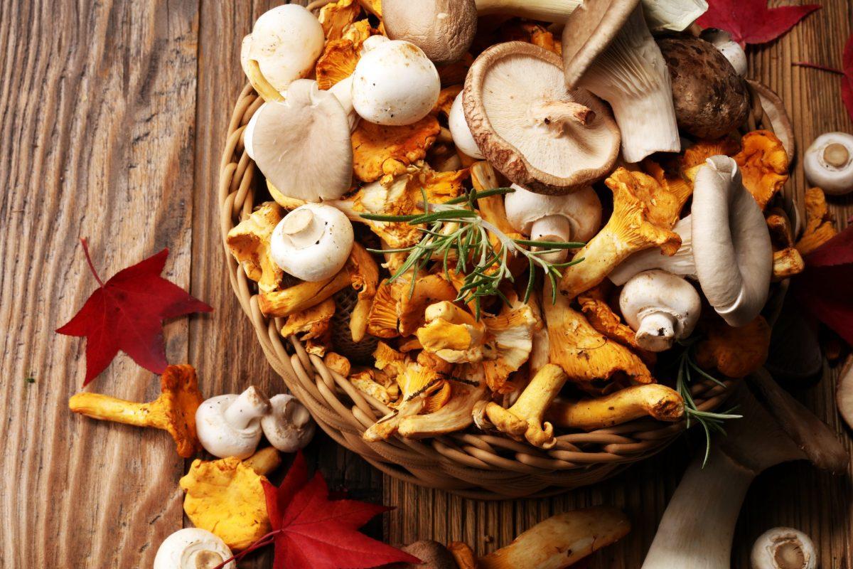 Nel meraviglioso regno dei funghi